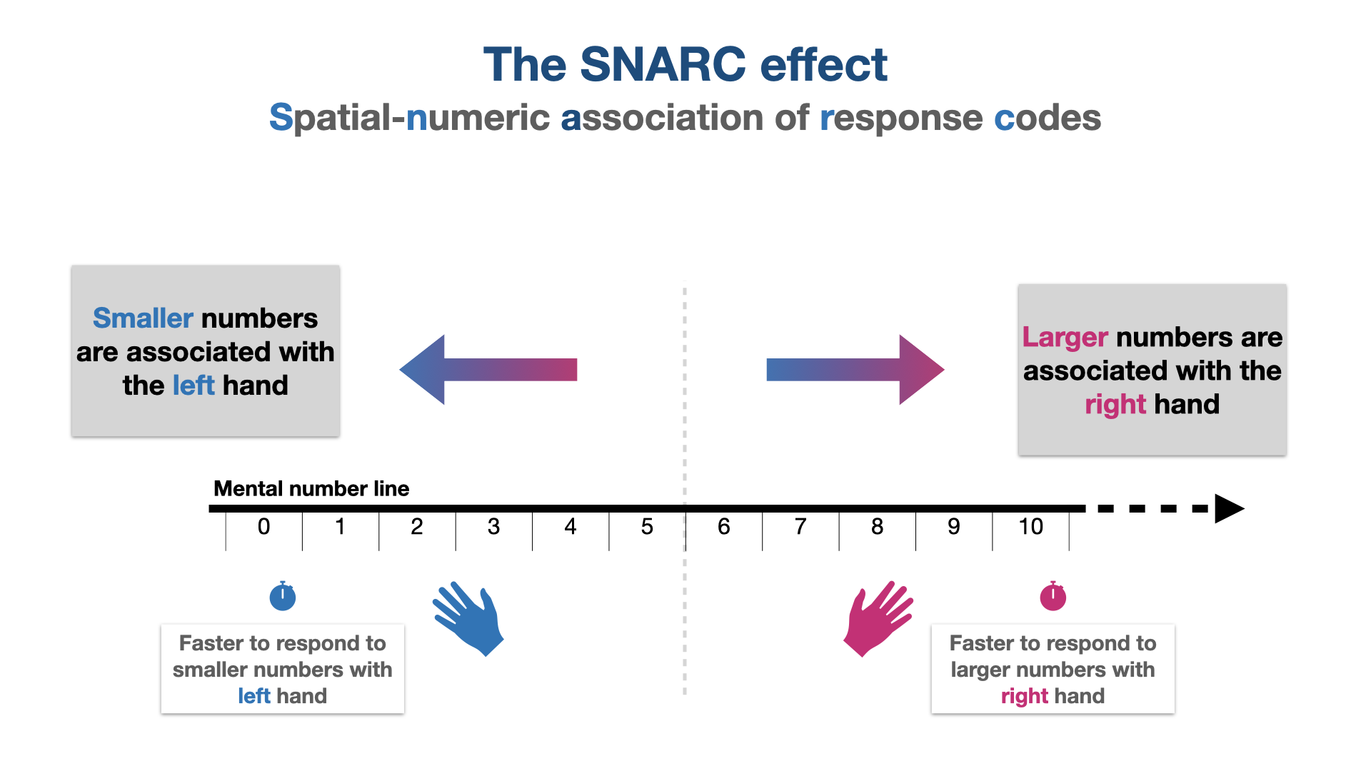 Illustration of the SNARC effect (Spatial numeric association of response codes) showing that smaller numbers are associated with left hand and large numbers with right hand responses