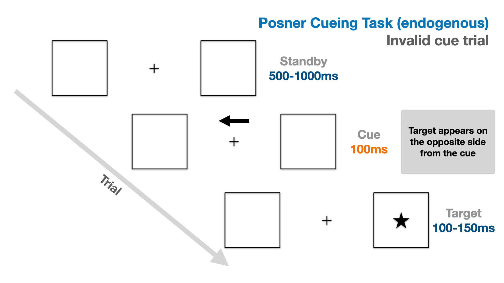 Illustration of the trial flow in an endogenous version of the Posner cueing task