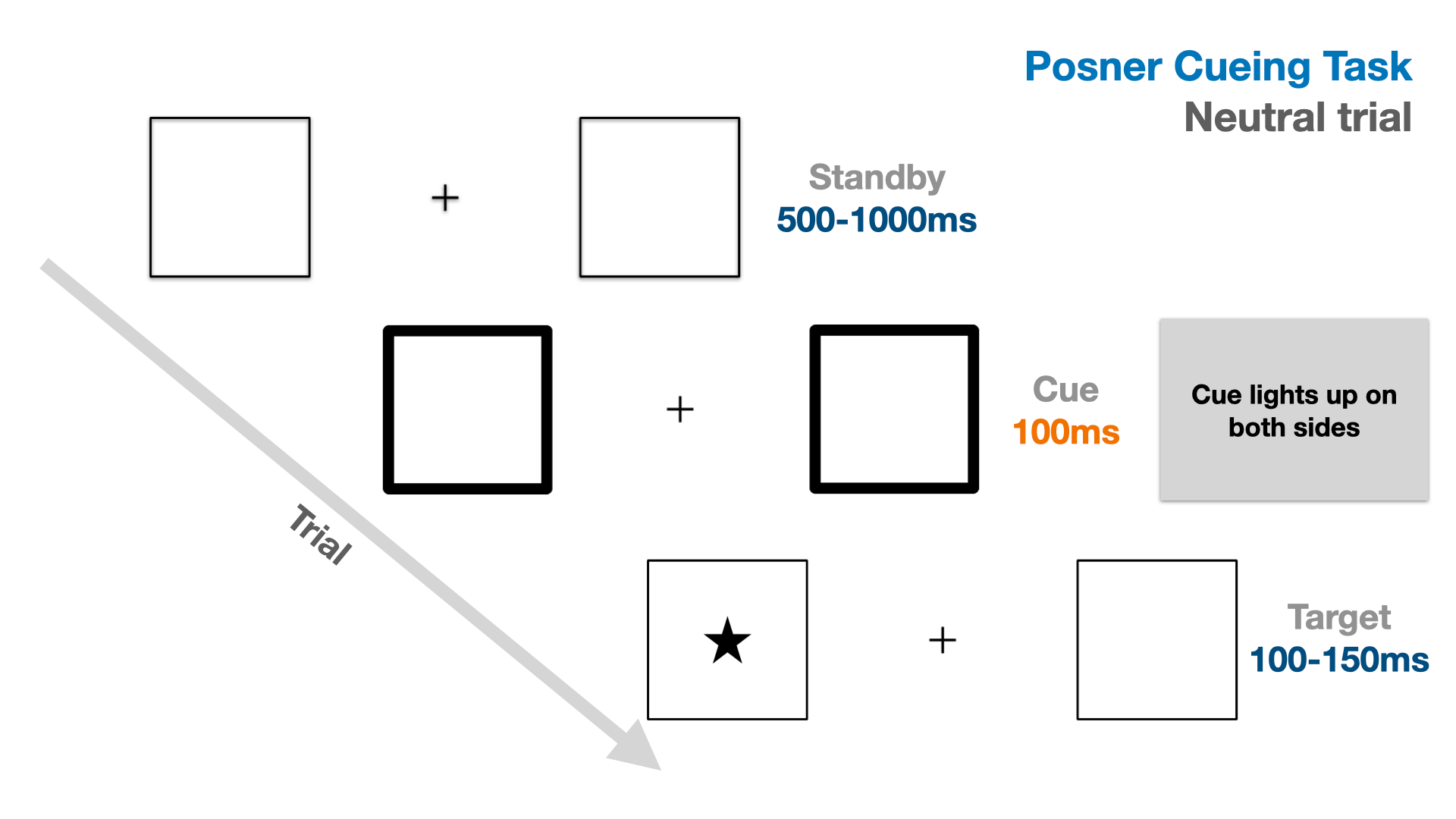 Illustration of the trial flow in a neutrally cued trial of the Posner cueing task