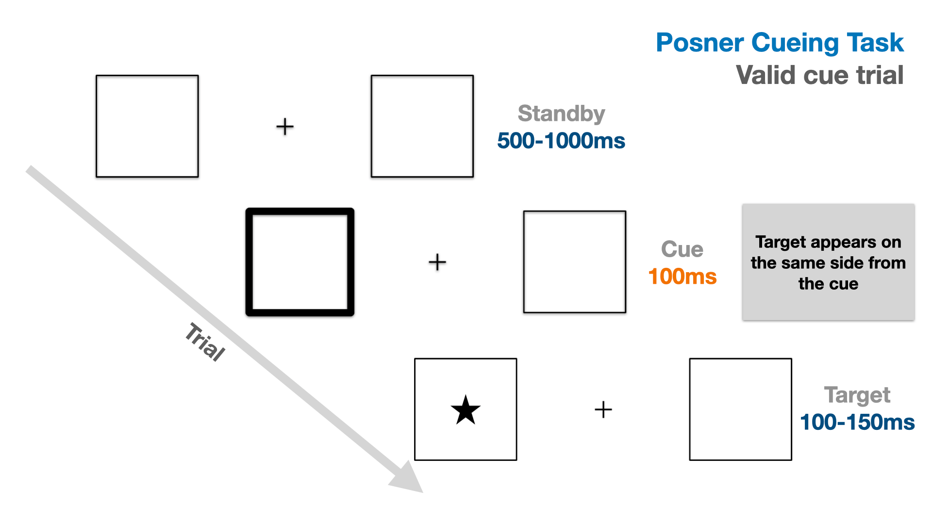 Illustration of the trial flow in a validly cued trial of the Posner cueing task